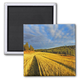 Wheat Field After Harvest Magnet