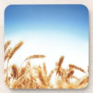 Wheat field against blue sky coaster
