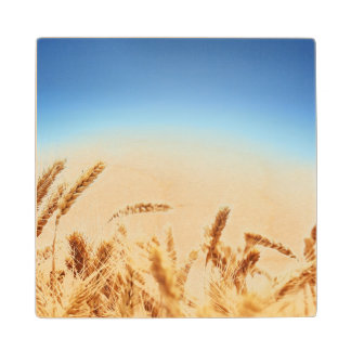 Wheat field against blue sky wood coaster