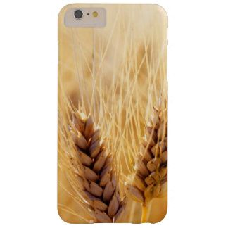 Wheat field barely there iPhone 6 plus case