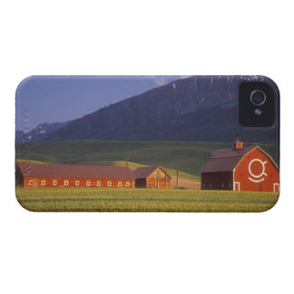 Wheat field in the Wallowa Valley, Just outside iPhone 4 Case-Mate Cases
