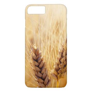 Wheat field iPhone 8 plus/7 plus case