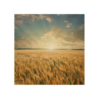 Wheat field on sunset wood wall art