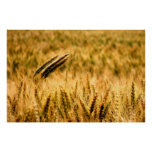 Wheat field posters