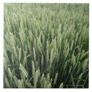 Wheat field tile