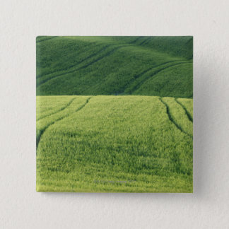 Wheat Field with Tire Tracks, Pienza, Val 15 Cm Square Badge