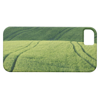 Wheat Field with Tire Tracks, Pienza, Val iPhone 5 Cases