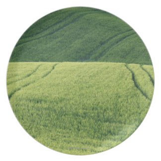 Wheat Field with Tire Tracks, Pienza, Val Plate