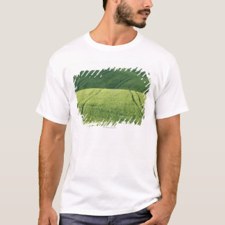 Wheat Field with Tire Tracks, Pienza, Val T-Shirt
