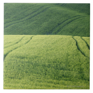 Wheat Field with Tire Tracks, Pienza, Val Tile