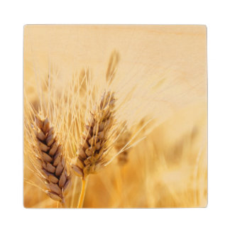 Wheat field wood coaster