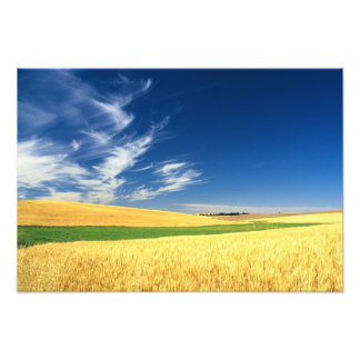 Wheat harvest on the Palouse in Eastern Photo Print