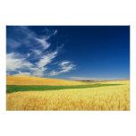 Wheat harvest on the Palouse in Eastern Poster
