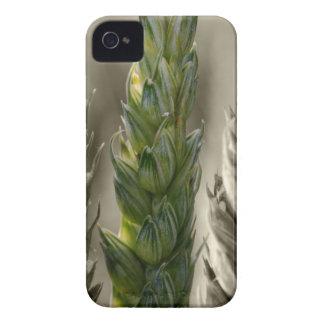 Wheat macro - Wheat macro iPhone 4 Covers