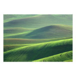 Wheat springs up in the hills of the Palouse Art Photo