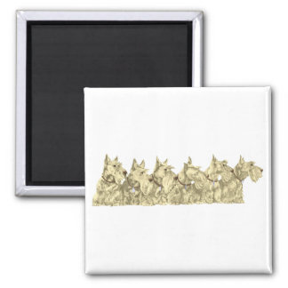 Wheaten Scotties All in a Row Square Magnet