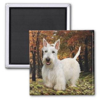 Wheaten Scottish Terrier Autumn Square Magnet