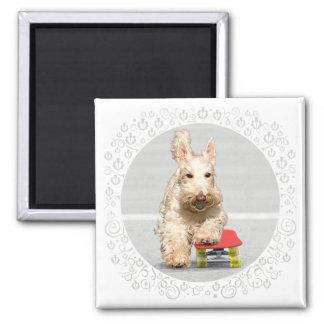 Wheaten Scottish Terrier Skateboard Square Magnet