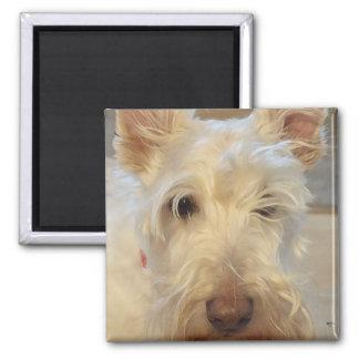 Wheaten Scottish Terrier Square Magnet
