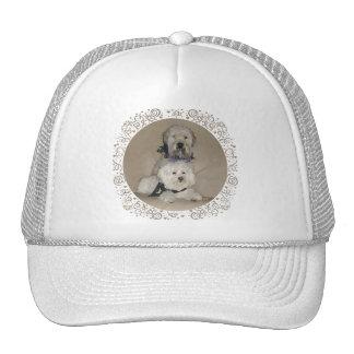 Wheaten Terrier and Havanese Cap