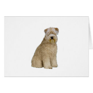 Wheaten Terrier (B)  (sit) Card
