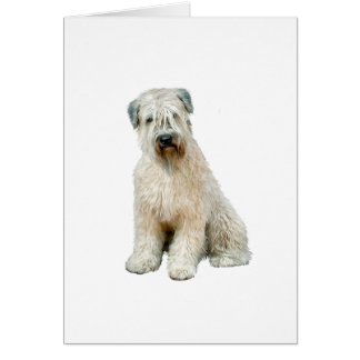 Wheaten Terrier (C) Card