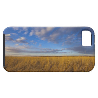 Wheatgrass and dramatic skies at Freezeout Lake iPhone 5 Cases