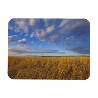 Wheatgrass and dramatic skies at Freezeout Lake Vinyl Magnet