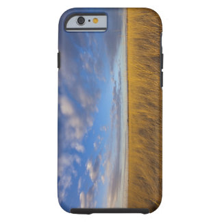Wheatgrass and dramatic skies at Freezeout Lake Tough iPhone 6 Case