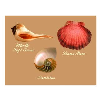 Whelk Left Turn,  Nautilus, Lions Paw Postcard