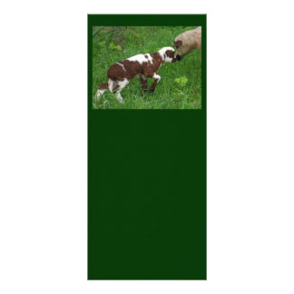 Where Ewe Been Personalized Rack Card