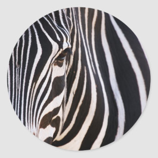 Where Is The Zebra? Classic Round Sticker