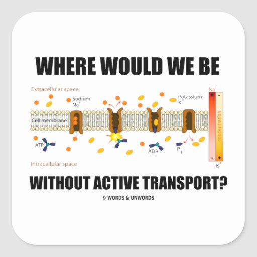 Where Would We Be Without Active Transport? Square Sticker