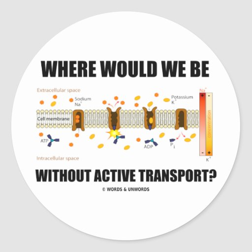 Where Would We Be Without Active Transport? Stickers