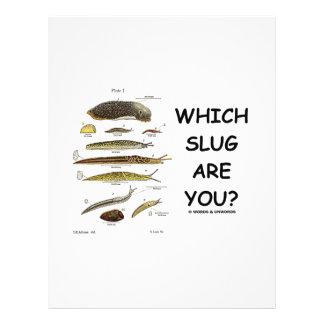 Which Slug Are You? 21.5 Cm X 28 Cm Flyer