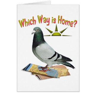 Which Way is Home? Pigeon Art Greeting Card