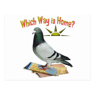 Which Way is Home? Pigeon Art Postcard