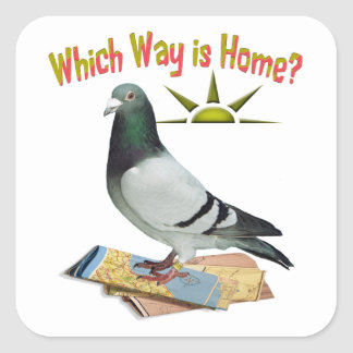 Which Way is Home? Pigeon Art Square Sticker
