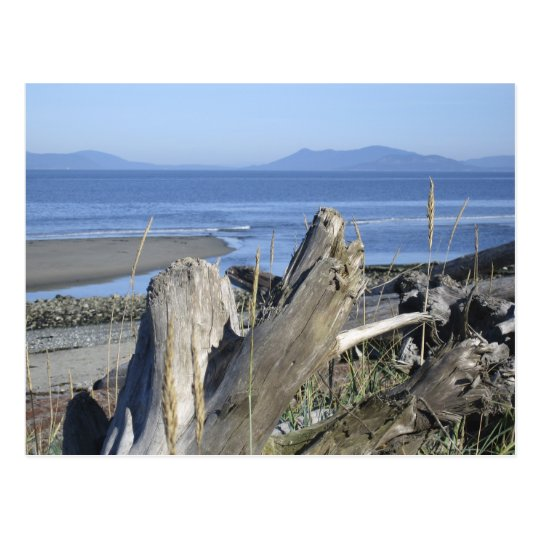 Whidbey Island 4 Postcard