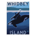 Whidbey Island, WashingtonOrca and Calf Poster