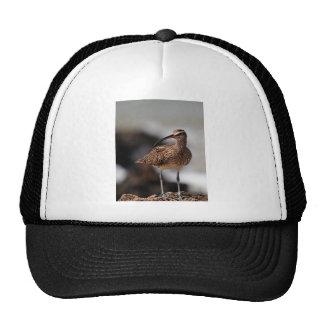 Whimbrel Cap