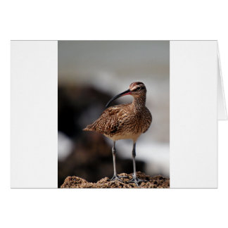 Whimbrel Card