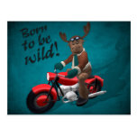 Whimsical Reindeer: Born to be wild!