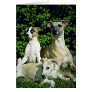 Whippet and pups greeting card