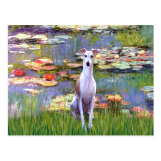 Whippet (brown-white) - Lilies 2 Postcard