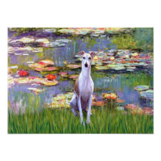 Whippet (brown-white) - Lilies 2 Poster