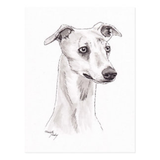 Whippet Dog Art Postcard