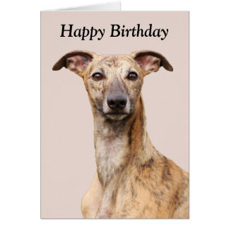 Whippet dog beautiful photo happy birthday card