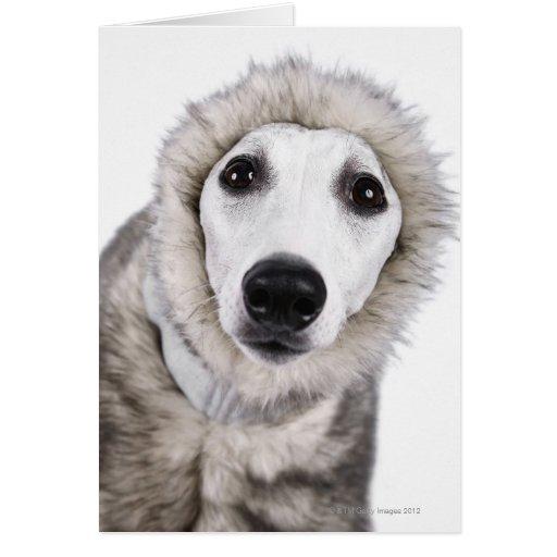 Dog Coat Manufacturers Uk