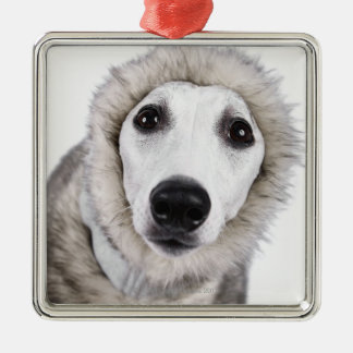 Whippet dog wearing fur coat, studio shot christmas ornament